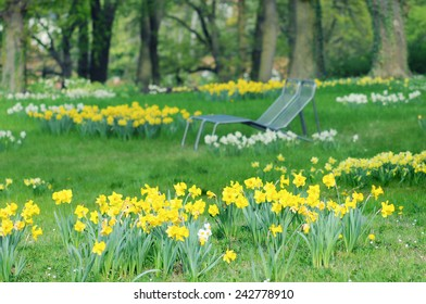 meadow of daffodil in a park with benches.