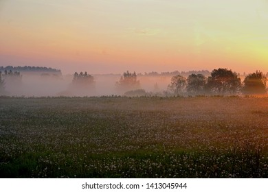 Meadow with dandelions early in the morning with trees in the fog, sunrise