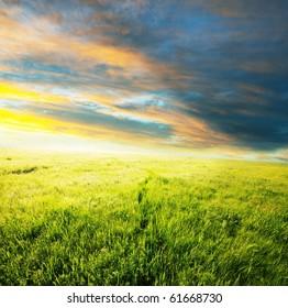 meadow at dawn