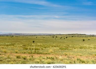 Meadow in desert