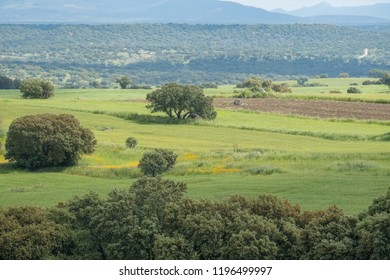 Meadow of Extremadura. Spain