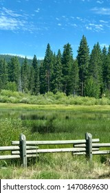 Meadow fence and pine trees in Tahoe