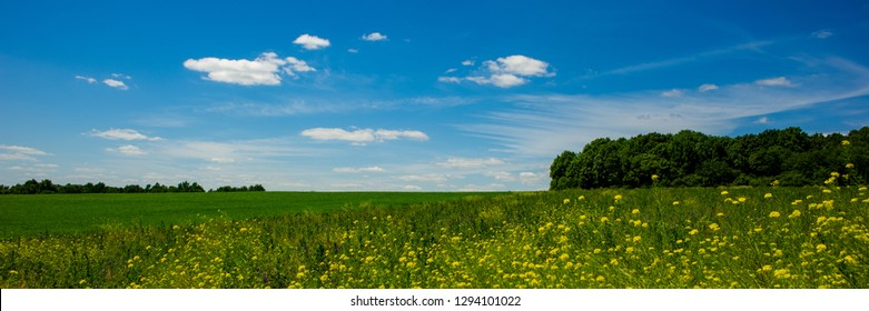 meadow and field on a sunny day, rural panoramic landscape. Spring season. Banner for design. Ukraine. Europe.