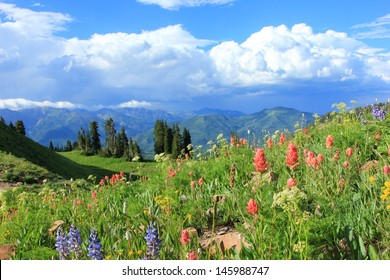 Meadow filled with wildflowers in the Utah mountains, USA.