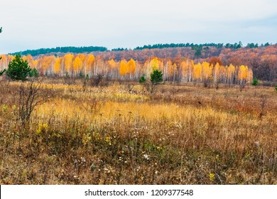 meadow in the floodplain of the river in the fall