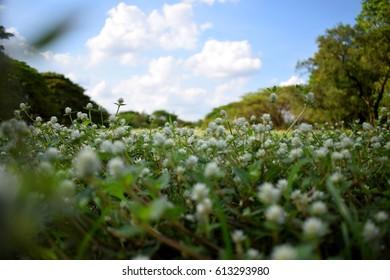 meadow flower in the garden - Shutterstock ID 613293980