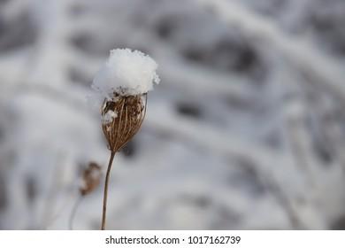 meadow flower in winter