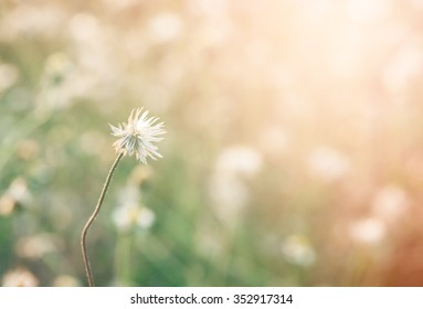 Meadow flowers in early sunny morning, Vintage autumn background