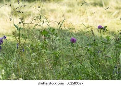 Meadow flowers in a field.