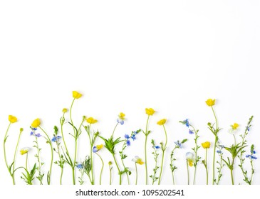 Meadow flowers with field buttercups and pansies isolated on white background. Top view with copy space. Flat lay.