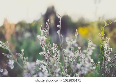 Meadow flowers in field. Nature