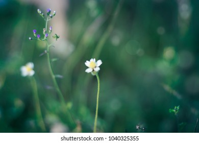 Meadow flowers and green - Nature in field - Soft focus