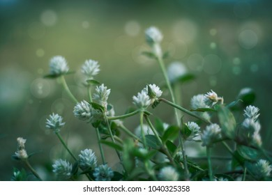 Meadow flowers - Nature in field - Soft focus