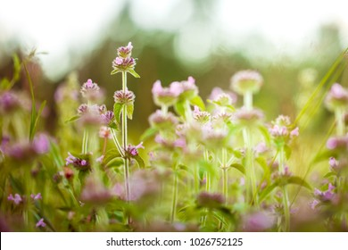 Meadow flowers. Nature view in spring