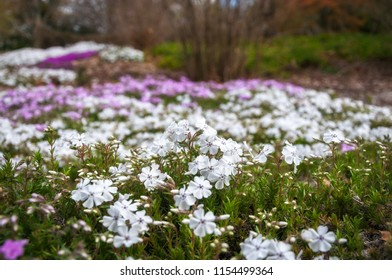 Meadow with flowers in selective focus at the Spring Festival at Mount Tomah Botanic Garden in the Blue Mountains, New South Wales, Australia.