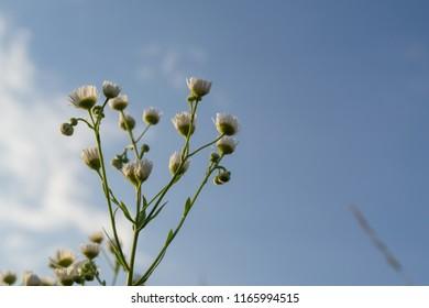 Meadow flowers. Slovakia