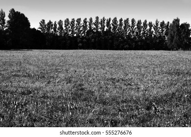 A meadow in the foreground and an arc-shaped row of trees in the background. Russia, town of Puschino, June 2015.