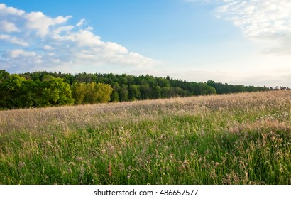 Meadow with Forest