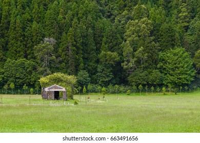 Meadow and forest at Lagoa das Furnas on the island of Sao Miguel. Sao Miguel is part of the Azores archipelago in the Atlantic Ocean.