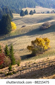Meadow, forest and three trees