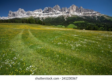 Meadow in front of the Rosengarten group in the Italian Dolomites.
