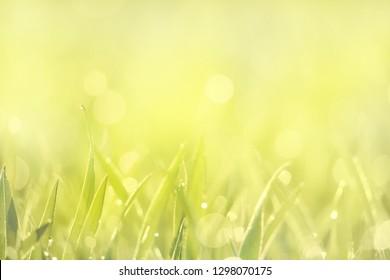 a meadow glistens in the bright sunlight