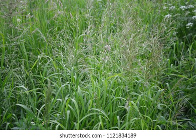 Meadow grass on a background of a green forest