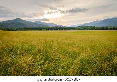 Meadow at Great Smoky Mountains National Park