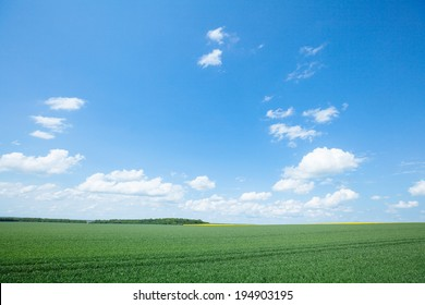 Meadow with green grass and blue sky with clouds