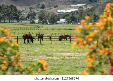 Meadow with horses grazing in the Boquete Panama area