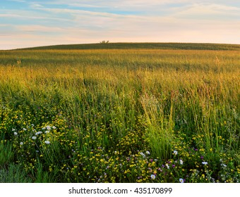 Meadow in Hudson Valley NY in springtime