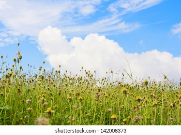 Meadow landscape with flowers