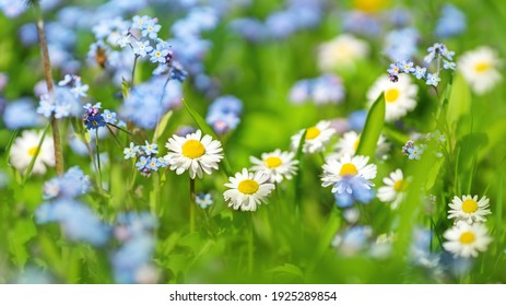 Meadow with lots of colorful spring flowers on sunny day. Nature floral background in early summer with fresh green grass. - Shutterstock ID 1925289854