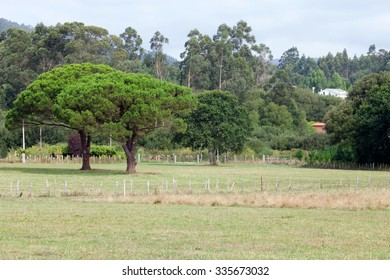 Meadow with lush green trees background