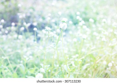 Meadow made with color filter, blur background