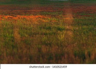 Meadow with mosses and yellow flowers in evening sunlight in spring.