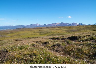 meadow in mountain landscape on iceland