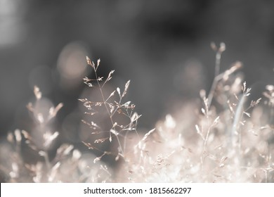 Meadow in muted colors with blurry background