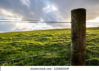 Meadow near the Cliffs of Moher, Ireland