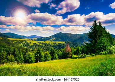 meadow near coniferous forest in mountains in evening