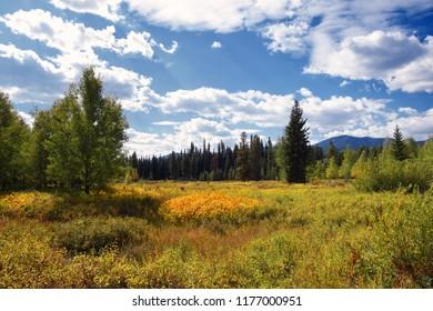 Meadow on Big Prairie in Glacier National Park, Montana