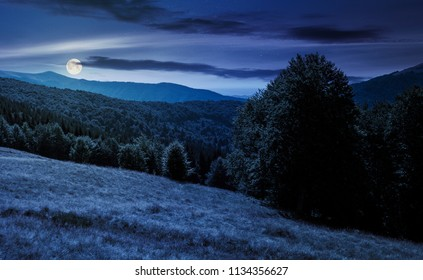 meadow on the forested hill in summer mountain landscape at night in full moon light. beautiful nature scenery on high altitude