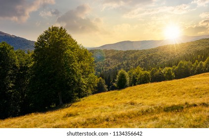 meadow on the forested hill in summer mountain landscape at sunset. beautiful nature scenery on high altitude