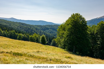 meadow on the forested hill in summer mountain landscape. beautiful nature scenery on high altitude