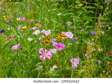 Meadow on the roadside with tall grass and many wild-growing colorful little flowers.