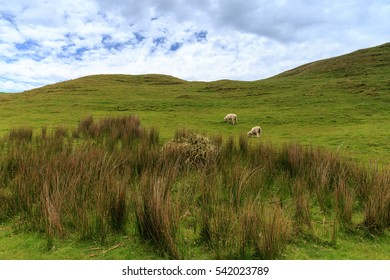 Meadow on the way to Wharariki Beach