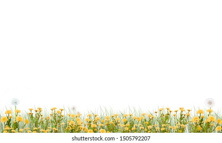Meadow on a white background green grass