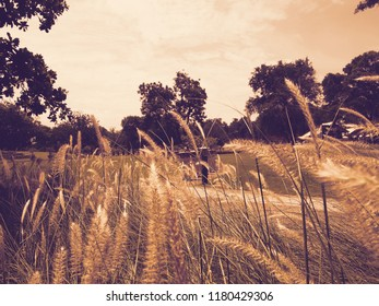 Meadow in the park and close up flowers of grass, sepia background