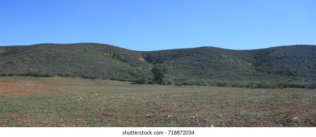 Meadow and rolling hills, California