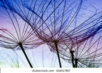Meadow Salsify Seeds. Shallow Depth of Field shows both Sharpness and Soft Focus across the image.